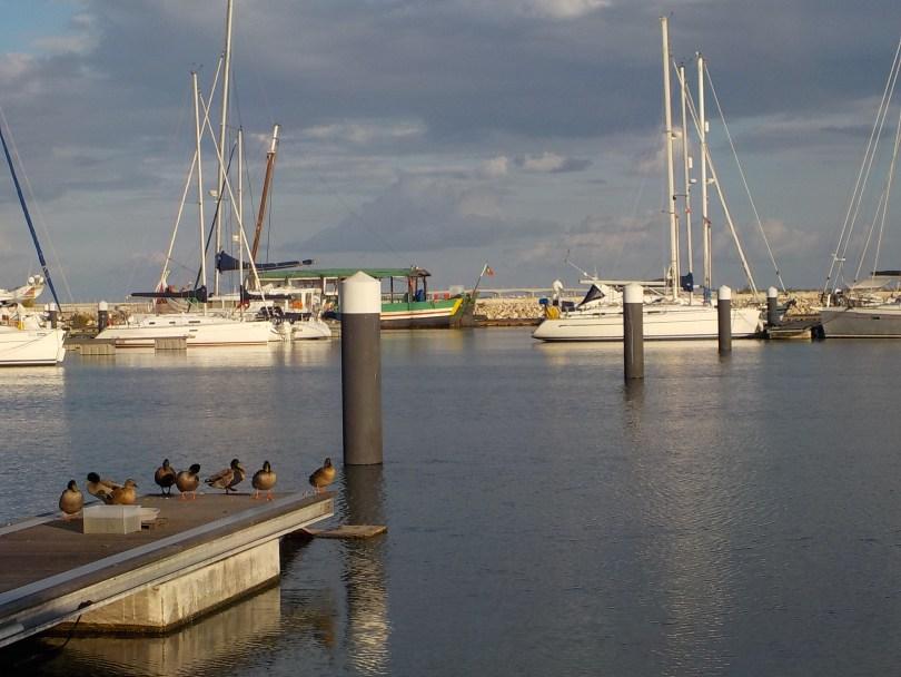 Photo prise à la marina Parque Das Naçoes !
