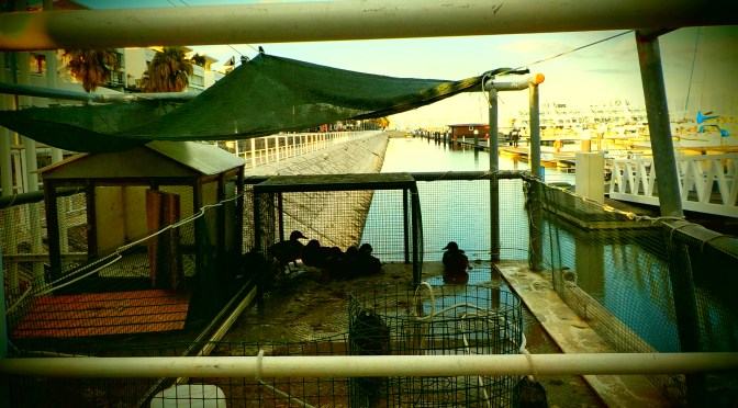Abris des canards du port à Lisbonne !