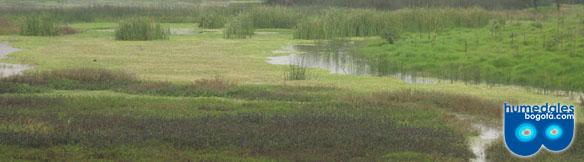 Humedal El Burro