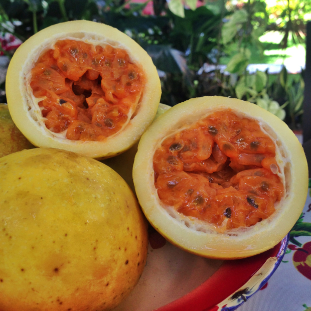 chinola-passion-fruit