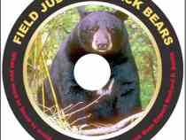 "Book Review: ""Field Judging Black Bears"" by Richard P. Smith"