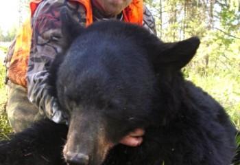 2011 bear hunt