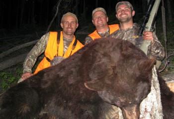 bear hunting montana