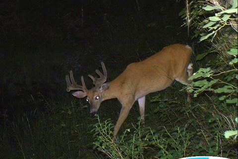 Deer Trail Cam Photos