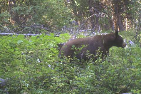 Bear Trail Cam Photos