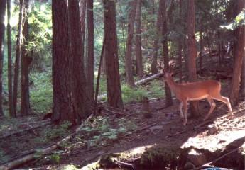 Montana wild life