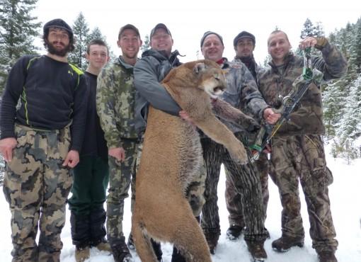 Montana mountain lions hunts
