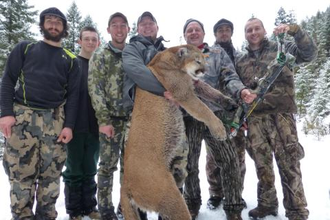 Mountain Lion Hunts 2014