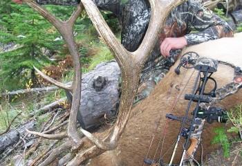 Archery Elk Hunts Montana (2)