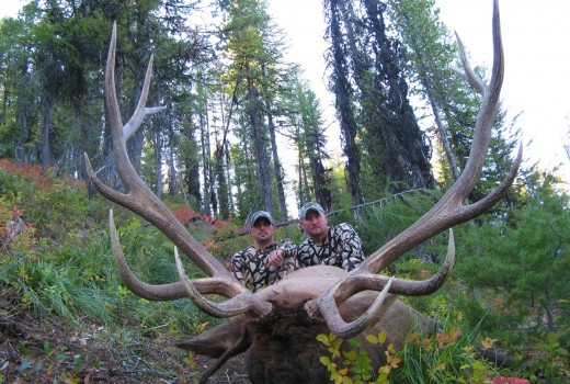 Archery Elk Hunts Montana (8)