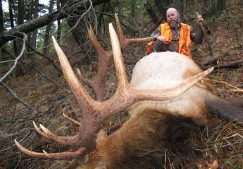 Elk hunting montana