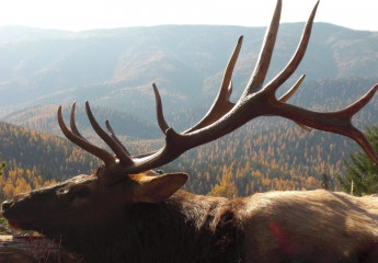 Elk hunts with Cody Carr 2008 (4)