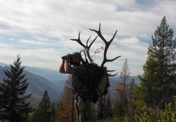 Montana elk hunting guide