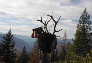 Montana elk hunting guide