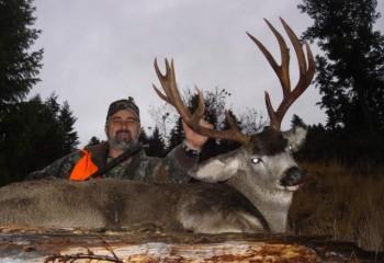 Mule deer montana hunting 2007