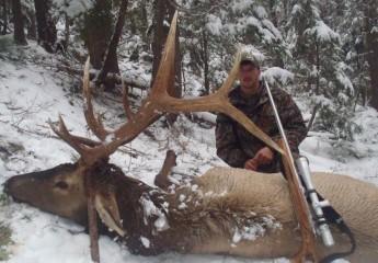 Rifle Elk hunts montana (2)