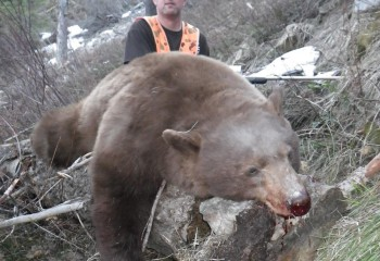 best black bear hunts montana