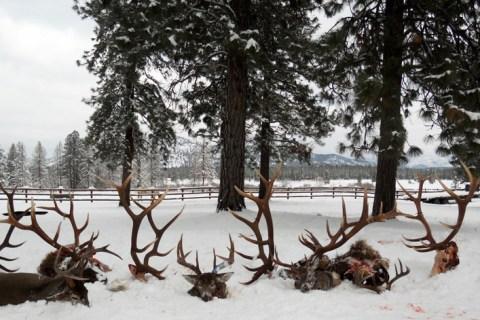 Elk Hunting Trips 2010