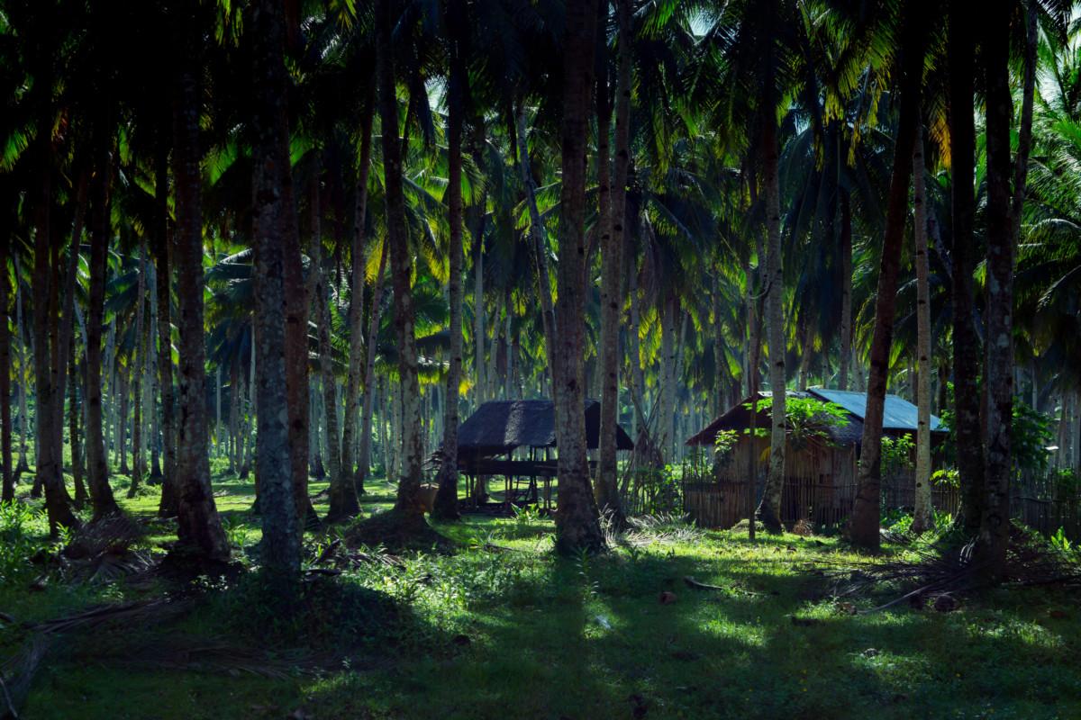 Poľnohospodárske obydlia popri ceste