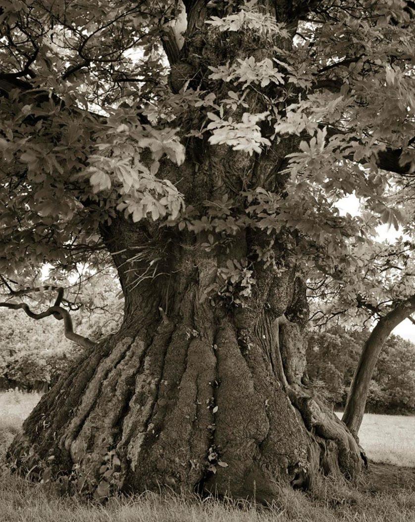 vecchi alberi 13