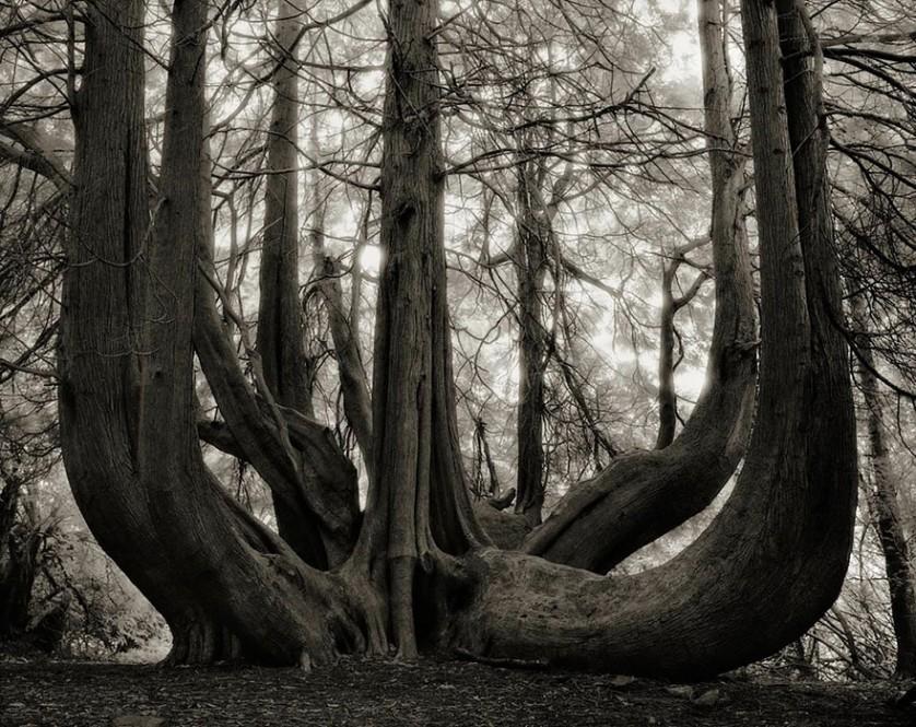 vecchi alberi 14