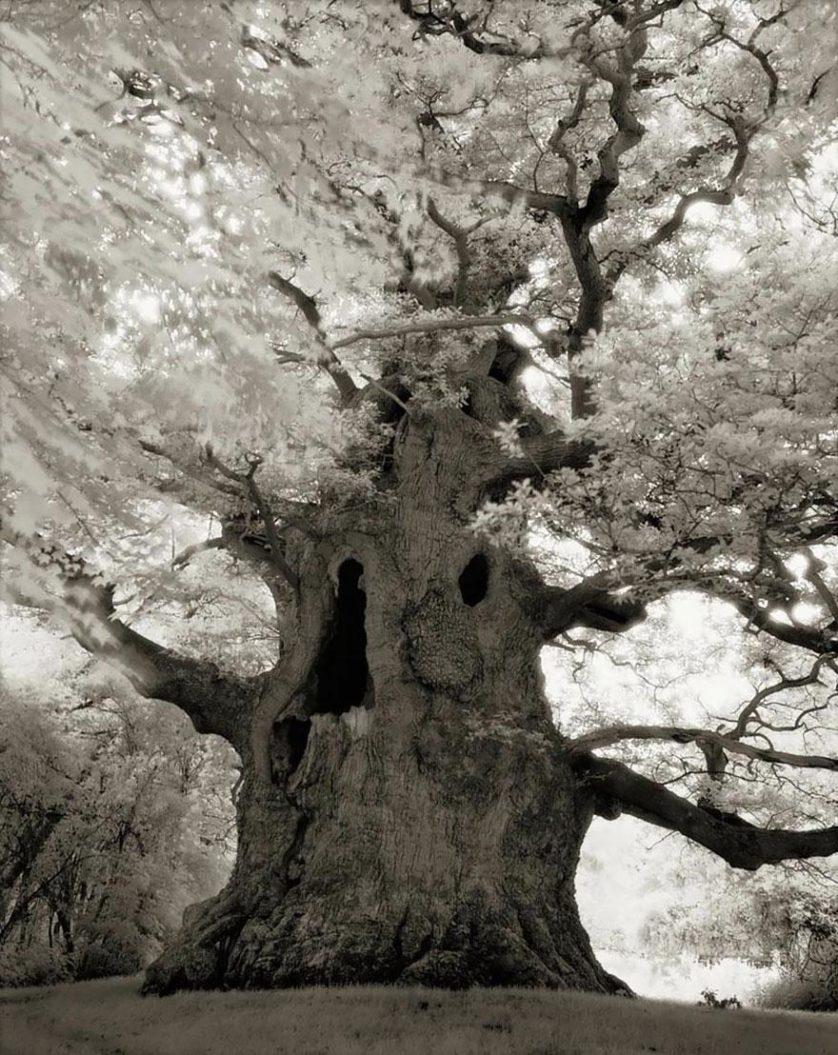 vecchi alberi 16