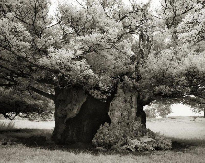 vecchi alberi 19