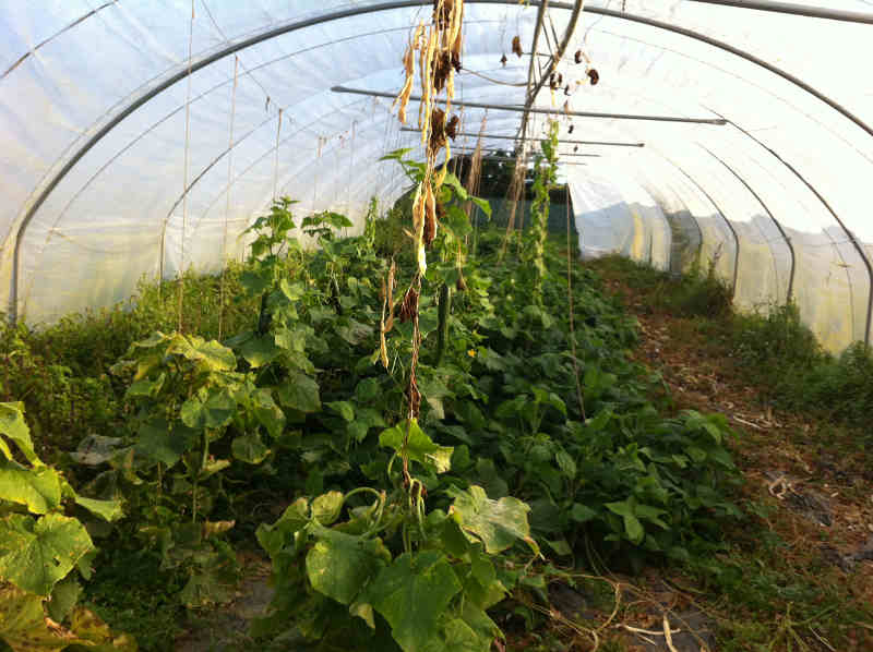 Légumes bio de l'amap
