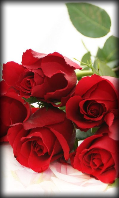 Roses Live Wallpaper Free Android Live Wallpaper download ...