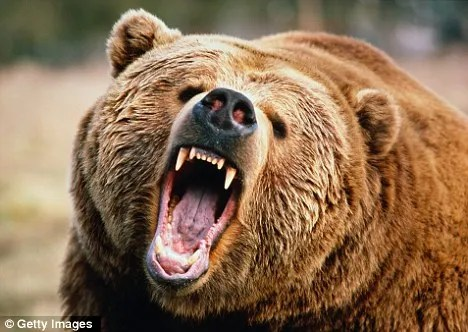 Put down: Six hunters were sent in by the emergency services to kill the mother bear and her three cubs (stock image)