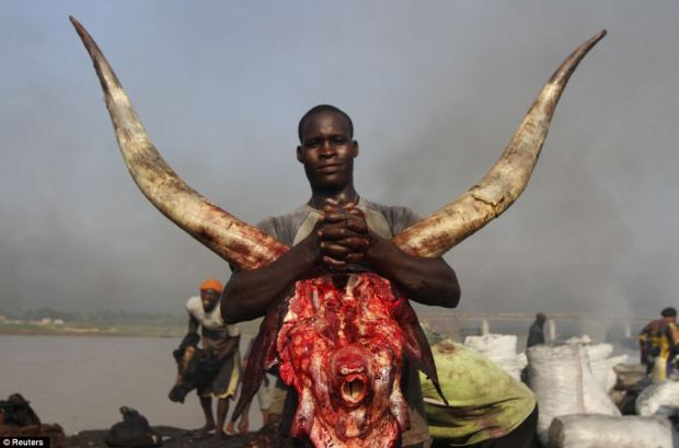 A man carries a cow head at the Swali abattoir in Yenagoa, the capital city of Nigeria's oil state of Bayelsa