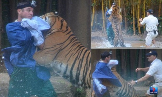 A senior tiger handler is in a serious but stable condition after being attacked by a tiger