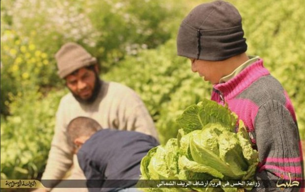Strange: ISIS released the disturbing execution photographs on the same day as they bizarrely attempted to portray everyday life under the terror group's control as happy and carefree - distributing images of smiling farmers living near Aleppo who use Western technology to grow and harvest their abundant crops