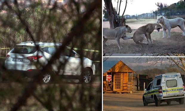 US woman dragged to her death by a lion at Gauteng Lion Park near Johannesburg