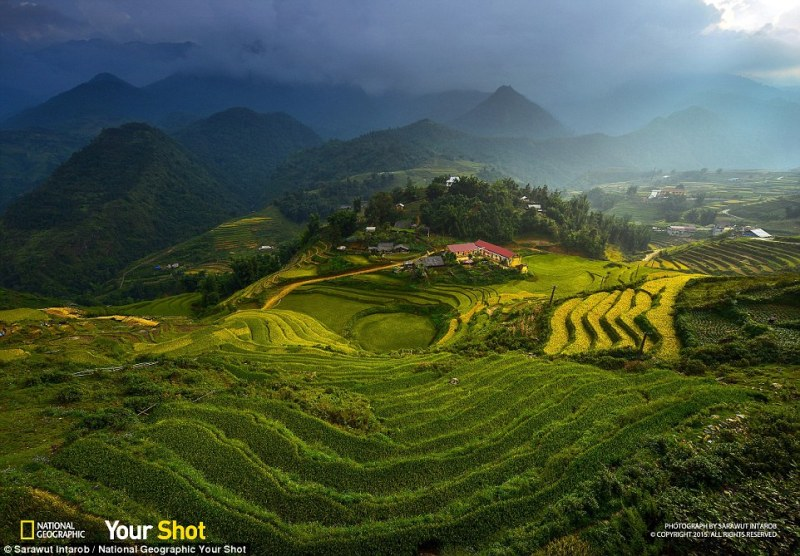 Moody skies: A storm cloud looms over this rice terrain in Vietnam photographed by one of the Your Shot community members