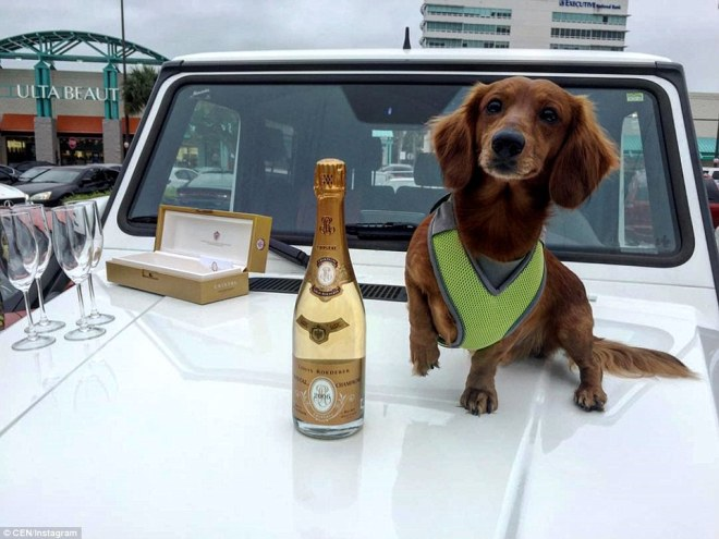 A bottle of champagne and a dog are photographed on a car bonnet, in what appears to be a shopping centre car park