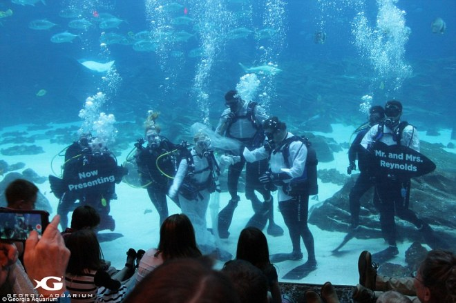 Next level:Crystal and Justin Reynolds, who met on the dating website Plenty Of Fish, enjoy diving together and visited the aquarium shortly after their engagement in December, where they married