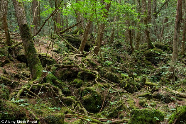 Haunting: The Aokigahara Forest, at the foot of Mount Fuji, where dozens of people kill themselves each year