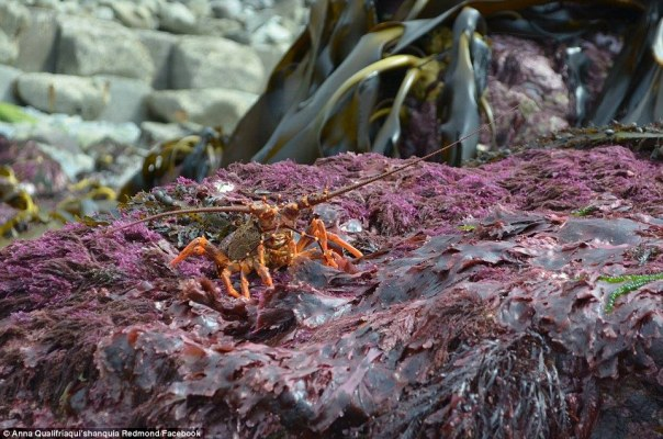 While incredible, the photos capture the devastating death of sea-life, some of which cannot survive above water