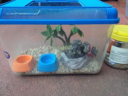 Hermit Crab Tank and Accessories | Pet Products | Gumtree Australia