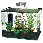 How to Set Up and Maintain a 10 Gallon Aquarium | eBay