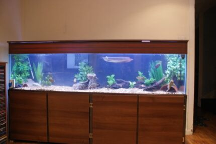 Aquarium/Fish Tank 6ft Stand | Fish | Gumtree Australia Perth City