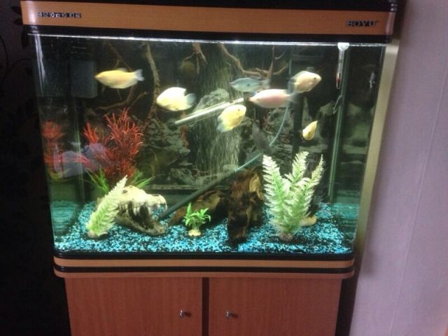 198ltr Boyu fish tank, fish and ornaments | United Kingdom | Gumtree