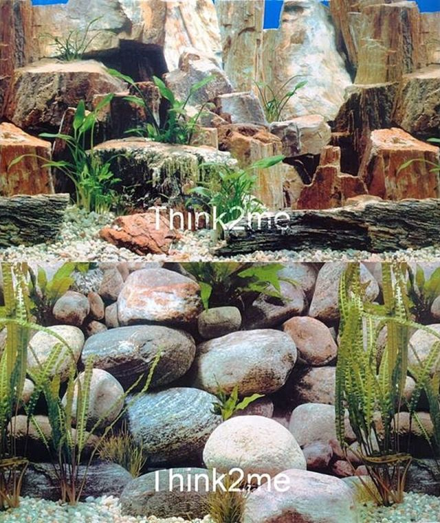 Fish Tank Background Aquarium 2 Sided Reptile Picture Image Wall 20