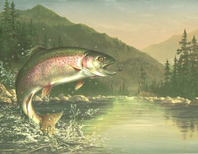 FLY FISHING CHECK OUT THAT RAINBOW TROUT AFTER THE FLY Wallpaper bordeR Wall | eBay