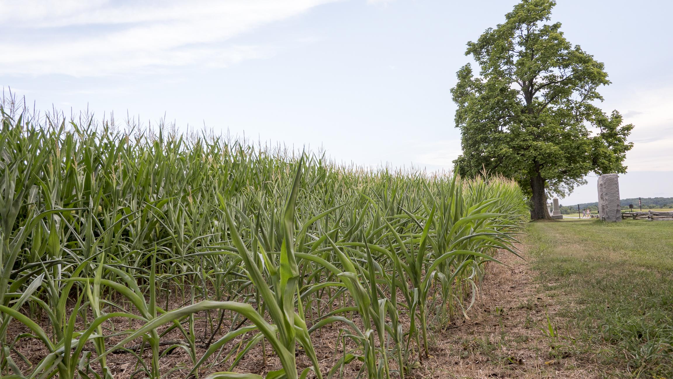 Fullsize Of Grass On Steroids