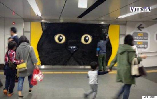 giant pettable cat