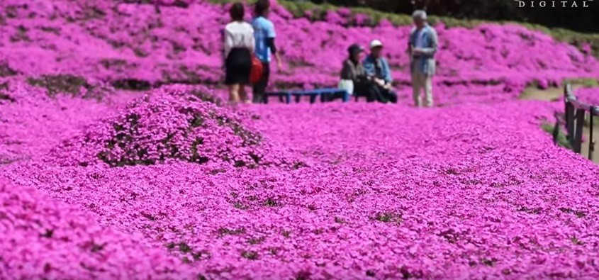 jardim japão
