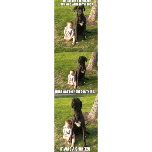 Medium Crop Of Bad Joke Dog