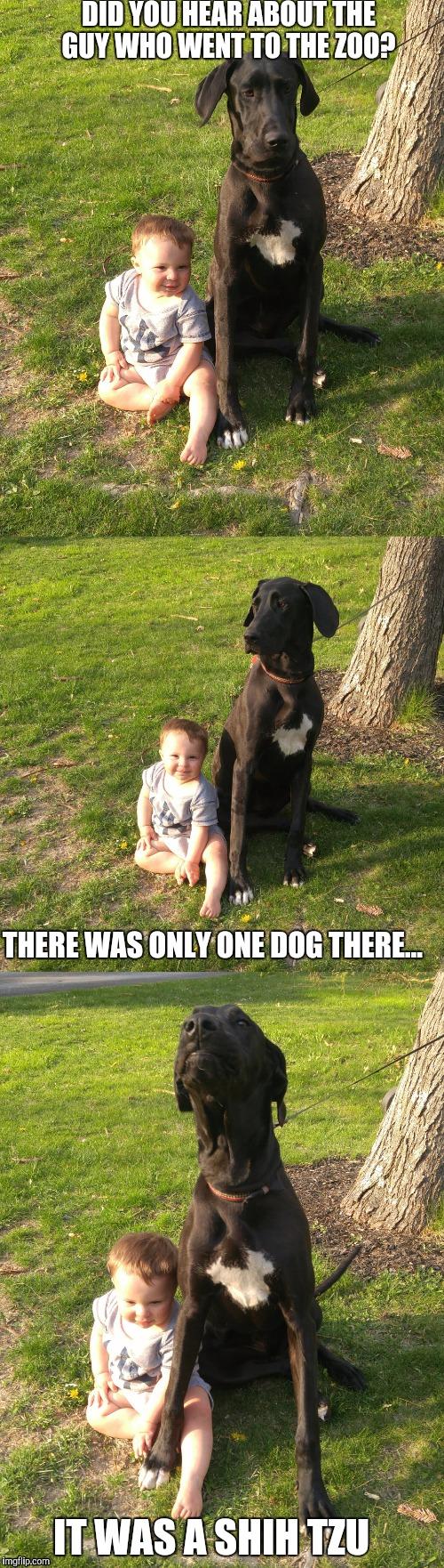 Large Of Bad Joke Dog